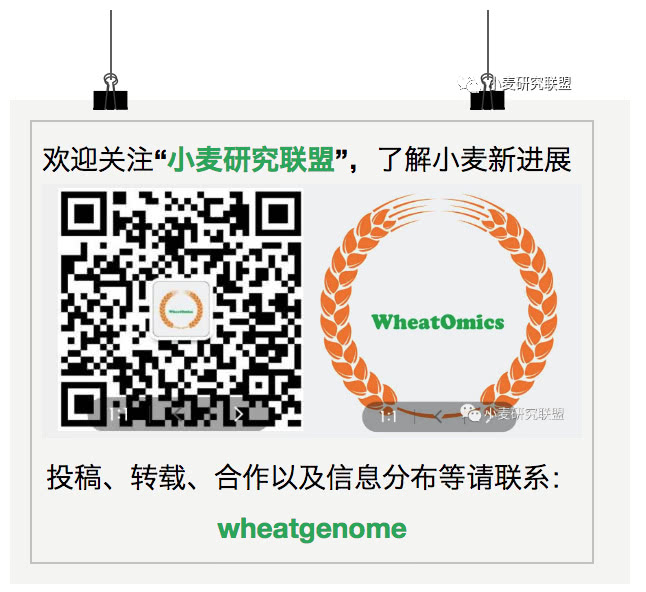 wheatomics2
